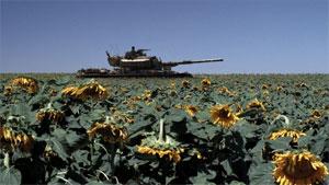 The sunflower field in 'Lebanon.