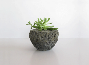 A plant on a piece of  LightStone.