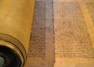 The 800-year-old Torah scroll. Photo courtesy of the Library of the University of Bologna.