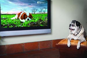 DogTVstory