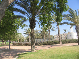 A Hadassah-JNF park. Photo by Esther Hecht.
