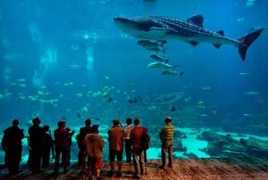 The Georgia Aquarium. Courtesy of Atlanta Convention & Visitors Bureau.