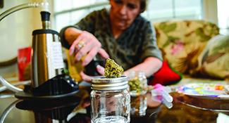 seniorcannabisfeature