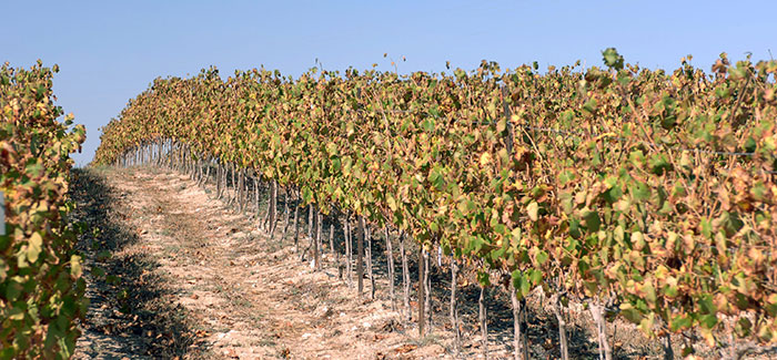 A Tour of Israel's Boutique Vineyards and Wineries
